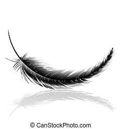 negro, delicado, pluma, con, sombra