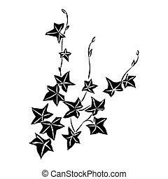 negro, hojas, garabato, hiedra