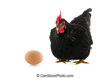 negro, huevo de pollo, fondo blanco