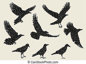 negro, mano, dibujado, aves, ravens., conjunto, manchadas