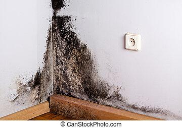 negro, molde, en, el, esquina, de, habitación, pared