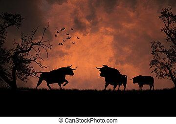 negro, ocaso, toros