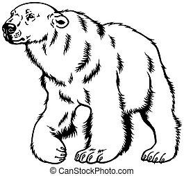 negro, oso polar, blanco