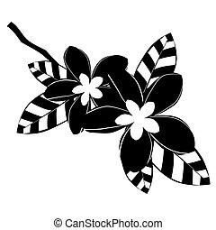 negro, plumeria, flores blancas
