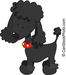 negro, poodle