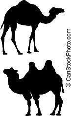negro, siluetas, de, dos, camellos
