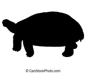 negro, tortuga, silueta