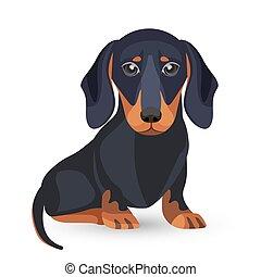 negro, vario, perro, dachshund, posiciones, piel