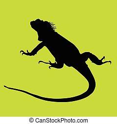 negro, verde, silueta, ba, iguana