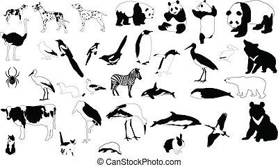 negro y blanco, animales