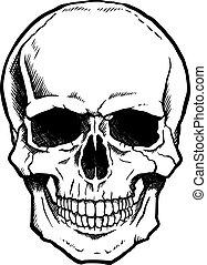 negro y blanco, cráneo humano, con, mandíbula