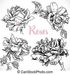 negro y blanco, dibujo, de, un, conjunto, de, rosas, flor