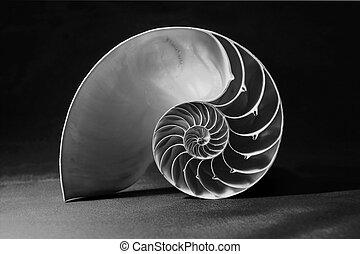 negro y blanco, esqueleto nautilo, con, patrón geométrico