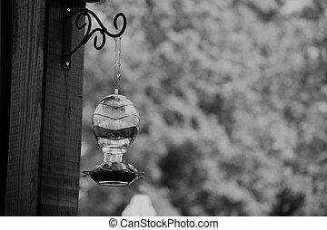 negro y blanco, tarareo, alimentador del pájaro, retrato
