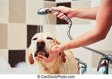 nehmen, hund, bad