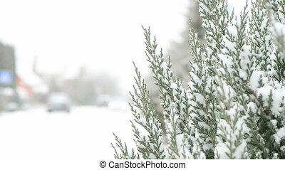 neige a couvert, arbre, pin, bord route