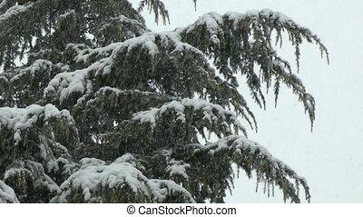 neige, arbre, lourd, pin