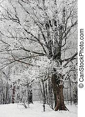 neige, arbres hiver, parc