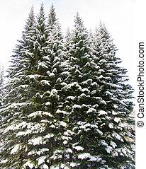 neige, arbres, sous