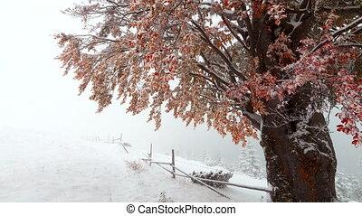 neige, baisser dans, forêt