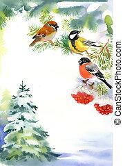 neige, bouvreuil, deux oiseaux