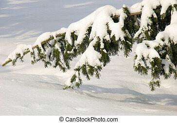 neige, branche, sous