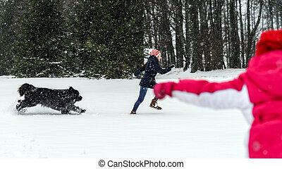 neige, chien, deux, soeurs, jouer, newfoundlander