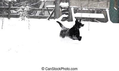 neige, courses, par, hiver, chien