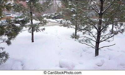 neige-couvert, chute neige, ville, route, arbres, par, conduite, vidéo, 4k, regard, hiver, hiver, voitures