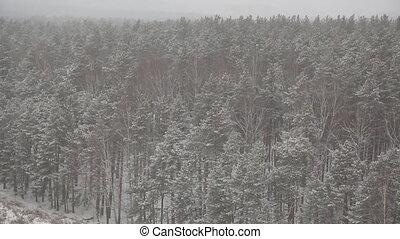 neige-couvert, hiver, forêt