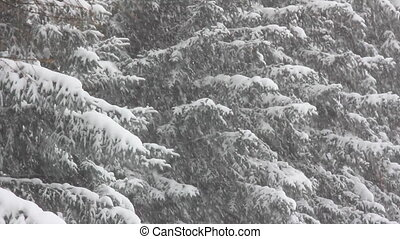neige-couvert, neige, sapins