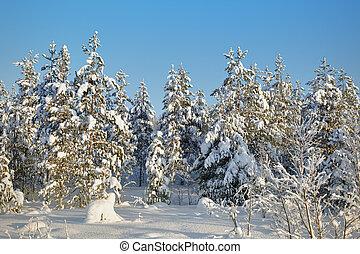 neige-couvert, paysage hiver, forêts