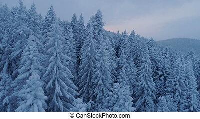 neige-couvert, sur, après, coucher soleil, forêt, impeccable, vol