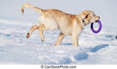 neige, espiègle, frais, chien