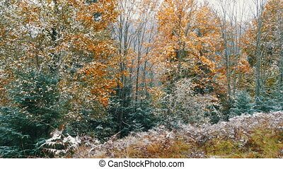 neige, fougères, couvert, arbres, montagnes, premier,...