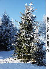 neige, hiver, clairière, forêt