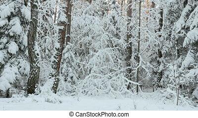 neige, hiver, forêt