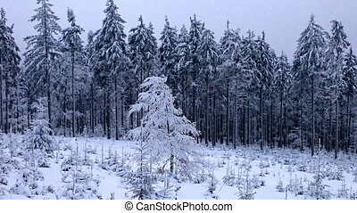 neige, parc, hiver, tomber