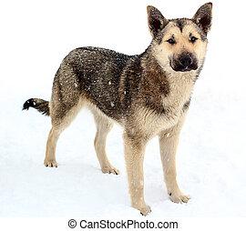 neige, sdf, chien