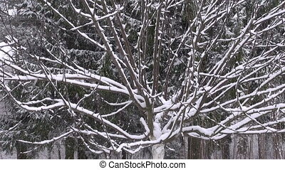 neige, tomber, jardin hiver
