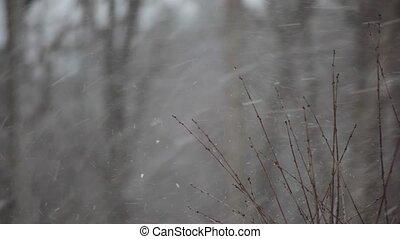 neige, tomber