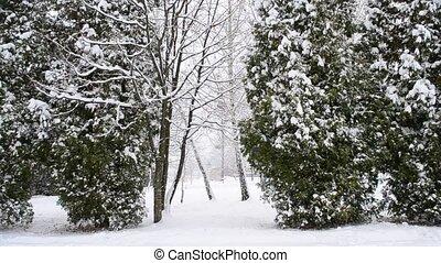 neiger, arrière-plan vert, arbres, thuja