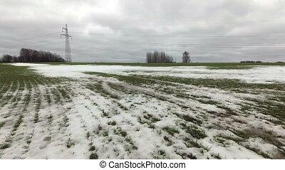 neigeux, fin, pousses, ferme, défaillance, récolte, champ vert, blé, temps, hiver