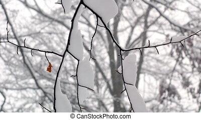 neigeux, forêt, arbres, hiver