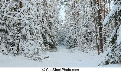 neigeux, forêt, hiver