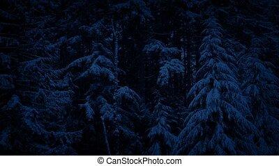 neigeux, forêt, paysage, nuit