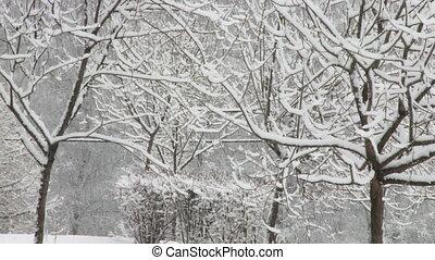 neigeux, forêt