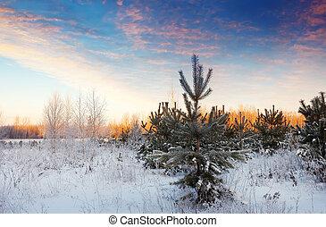 neigeux, jour ensoleillé, nature