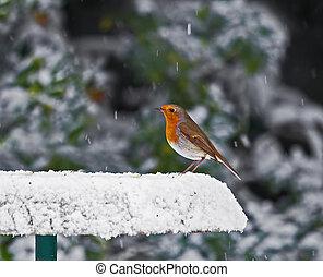 neigeux, rouge-gorge, nourrisseur