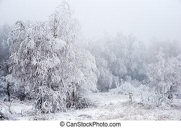neigeux, russie, hiver, mystérieux, noël, forêt, brouillard